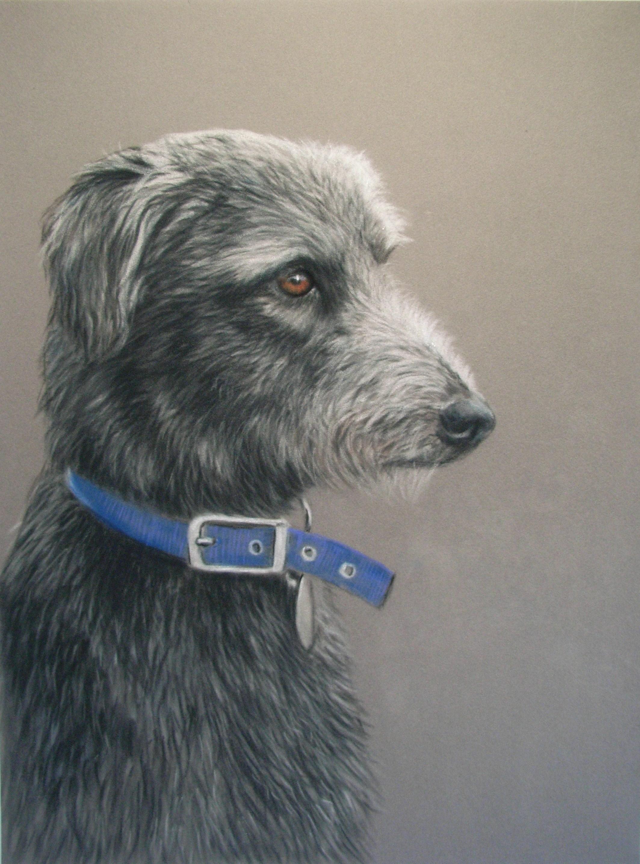 animal paintings by shane